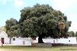 SpaccaMurgia, Puglia - masseria Tagliente